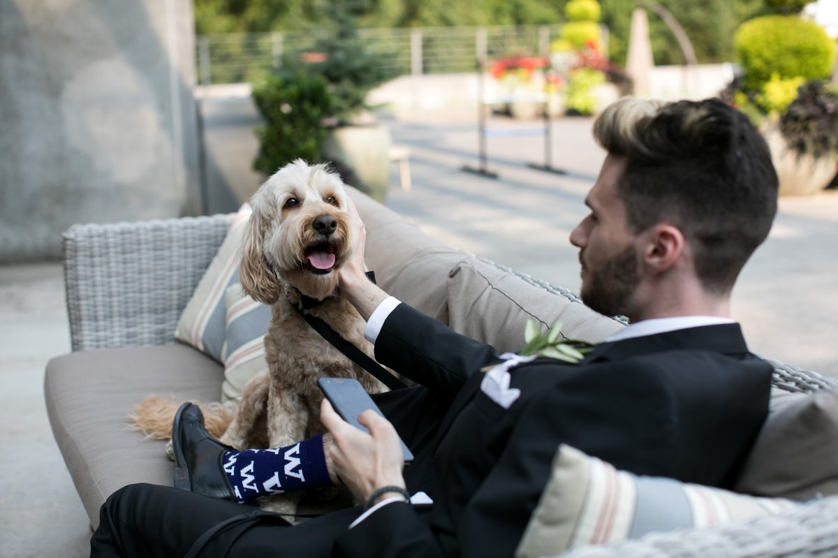 wedding_dog